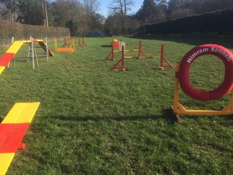 exercising on the dog agility course